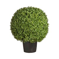 Sia Potted Topiary Boxwood Shrub Large