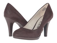 Anne Klein Lolana Brown Reptile Women's Shoes