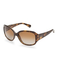 Dandg D And G Sunglasses Dd8065 Brown Brown