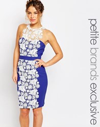 Paper Dolls Petite Lace Panel Halter Pencil Dress Blue