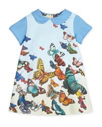 Papergirl Collection Collared Butterfly Shift Dress Blue