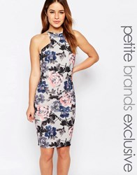 Paper Dolls Petite Bloom Print Pencil Dress With Cut Away Shoulder Multi