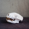 Skunk Skull With 16 K Gold Teeth Van Porcelainskulls Op Etsy