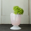 Frosted Rose Vase Collection in New SHOP House 2bHome at Terrain