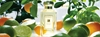 Lime Basil 26 Mandarin 3e The Collections 3e Fragrances 3e Jo Malone