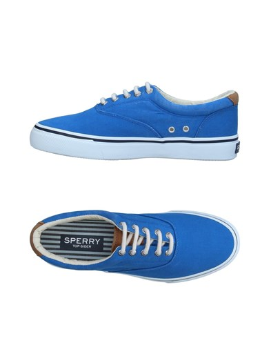 Sperry Top Sider Sneakers Blue b8nfz4T