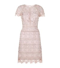 Reiss Orchid Lace Dress Female Rose