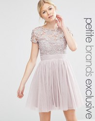 Little Mistress Petite Short Sleeve Lace Bodice Mini Dress With Tulle Skirt Blush Pink