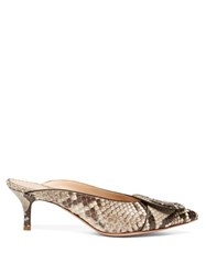 Gianvito Rossi Ruby 55 Buckled Python Mules Grey Multi