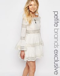 White Cove Petite All Over Lace Bell Sleeve Panelled Skater Dress White