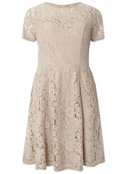 Dorothy Perkins Taupe Lace Fit And Flare Dress Grey