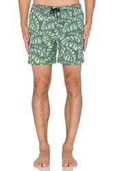 Globe Monstera Pool Short Green