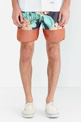 Without Walls Dolphin Hem Boardshort Brown