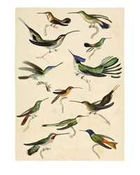 The Dybdahl Co. Hummingbirds Print