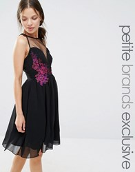 Little Mistress Petite Sheer Mesh Detail Mini Skater With Contrast Floral Embroidery Black
