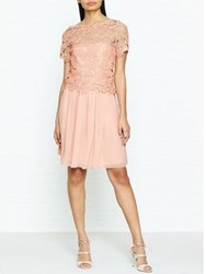Reiss Milla Lace Occasion Dress Pink