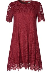 Alice And You Lace Shift Dress Burgundy