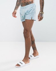 Oiler And Boiler Tuckerneck Swim Short In Polka Dot Light Blue Sky Blue
