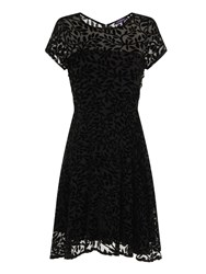Hotsquash Burnout Fit N Flare Dress In Clever Fabr Black