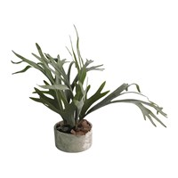 Abigail Ahern Staghorn Plant In Clay Pot