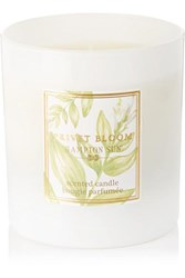 Hampton Sun Privet Bloom Scented Candle Colorless