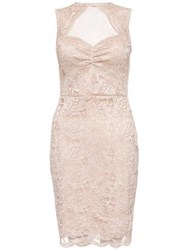 Dorothy Perkins Quiz Champagne Lace Bodycon Dress