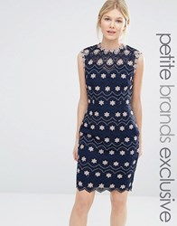 Paper Dolls Petite Pencil Dress With High Neck And All Over Contrast Floral Lace Multi Navy