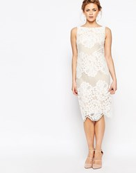 Coast Moiselle Lace Pencil Dress White