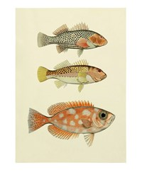 The Dybdahl Co. Fish Print