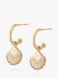 Daisy London Isla Shell Hoop Drop Earrings Gold