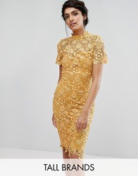 Paper Dolls Tall Allover Premium Lace Pencil Dress Mustard Gold Yellow