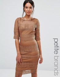 Paper Dolls Petite 1 2 Sleeve All Over Lace Pencil Dress Camel Tan