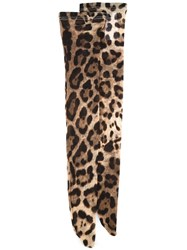 Dolce And Gabbana Leopard Print Stockings Brown