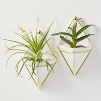 Cb2 Set Of 2 Trigg Wall Vases