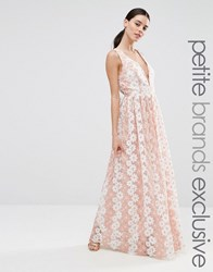 True Decadence Petite Premium Floral Lace Plunge Maxi Dress Pink