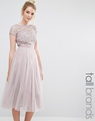 Little Mistress Tall Short Sleeve Lace Bodice Midi Dress With Tulle Skirt Blush Pink
