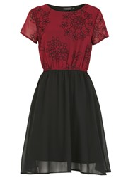 Pussycat Floral Contrast Skater Dress Burgundy