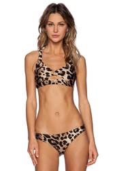 Nookie Wild One Calypso Crop Top Tan