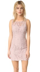 Bb Dakota Thessaly Sleeveless Lace Dress Champagne
