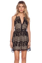Liv Sandra Lace Dress Black