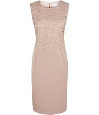 Petite Lace Occasion Dress Tan