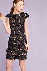 Eva Franco Anni Floral Pencil Dress Black