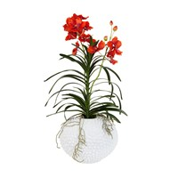 Sia Potted Vanda Orchid