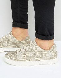 Asos Trainers In Grey Snakeskin Effect Grey