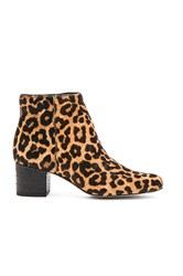 Sam Edelman Edith Cow Hair Bootie Brown