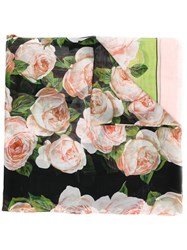 Dolce And Gabbana Rose Print Scarf Pink