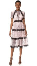 Nicholas Iris Lace Midi Paneled Dress Vintage Rose