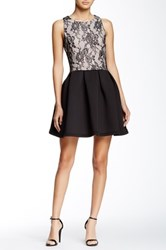 Romeo And Juliet Couture Lace Flare Sleeveless Dress Black