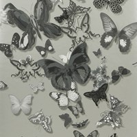 Christian Lacroix Butterfly Parade Wallpaper Pcl008 06 Zinc
