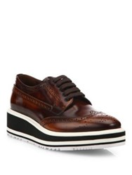 Prada Brogue Leather Micro Platform Oxfords Tobacco